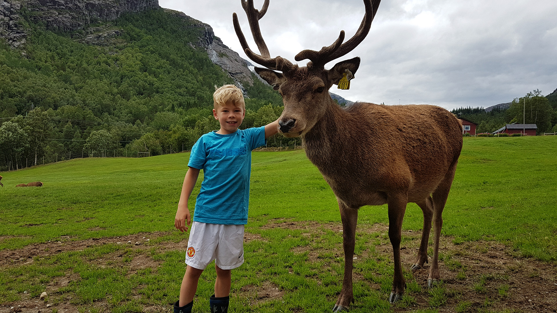 Child and a red deer