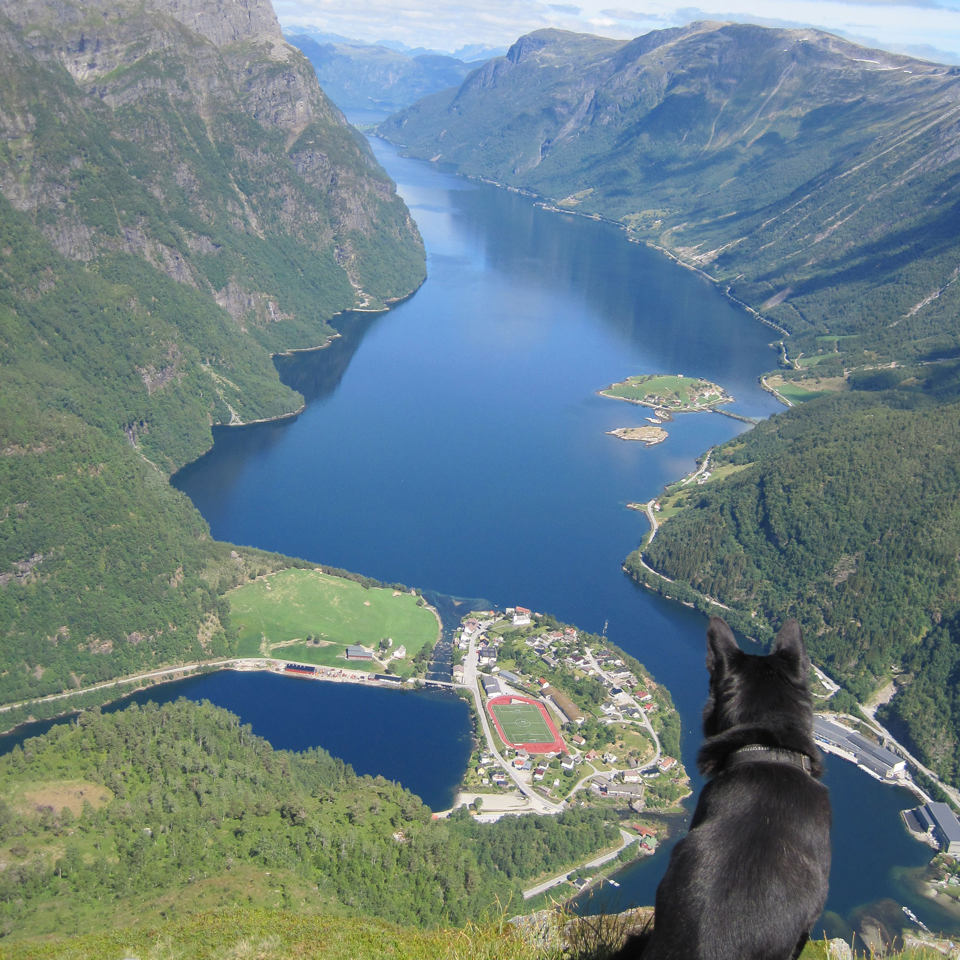 Dog looking at the fjords.